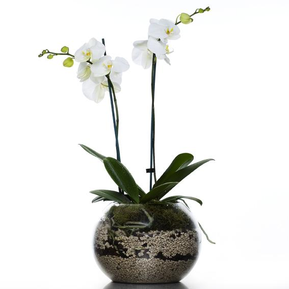 Orchid Plant In A Fishbowl 1