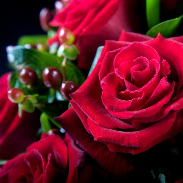 Loving You Reds 1