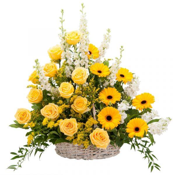 Sunshine Yellows 1