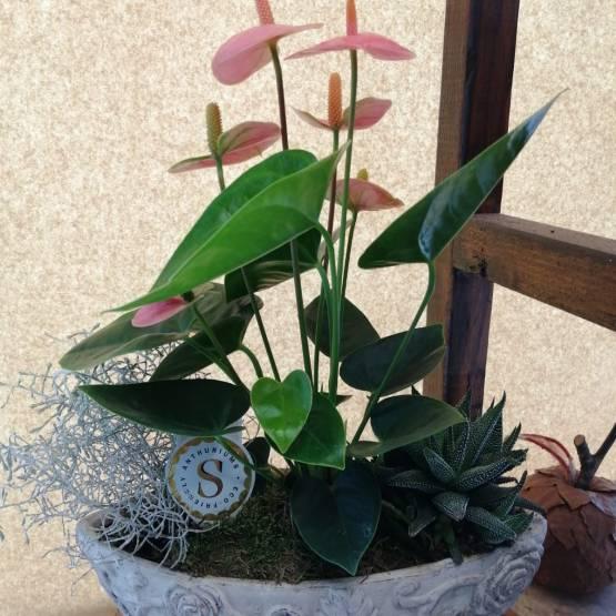 Mix Planted Basket in a Ceramic Pot - Best Buds Florist