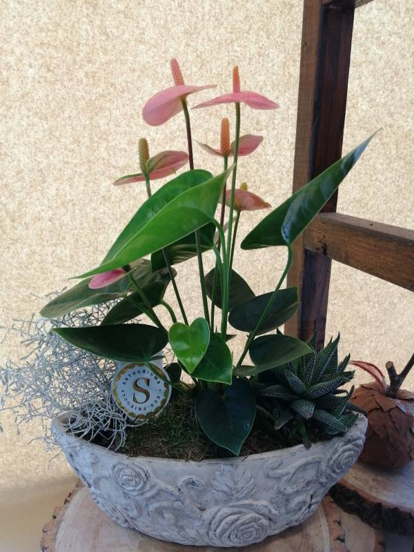 Mix Planted Basket in a Ceramic Pot - Best Buds Florist